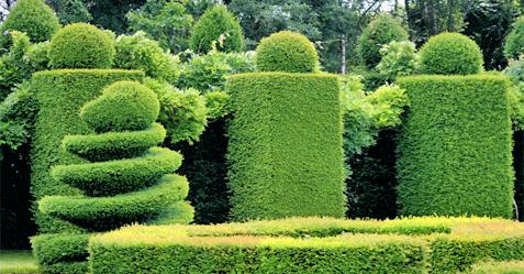 SOS Jardin : entretien de jardin à Arras 62