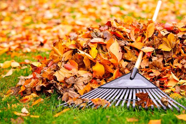 jardin-entretien-ramassage-de-feuilles