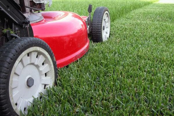 jardin-entretien-tonte-de-pelouse