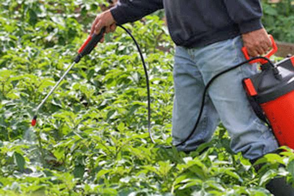 jardin-entretien-traitement-pulverisation