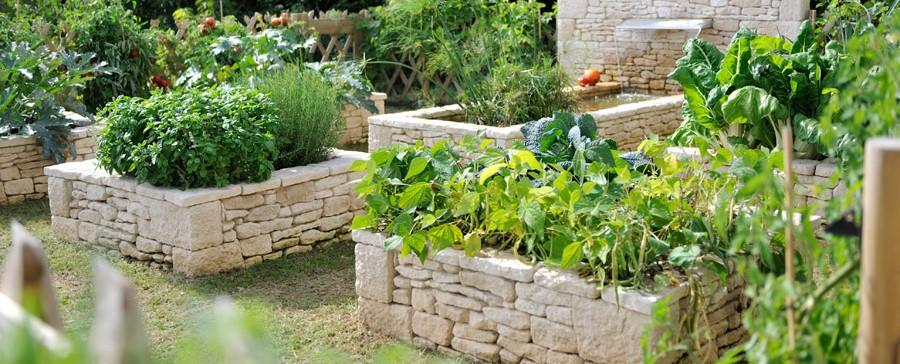 Cr ation de potager fruits et l gumes dans les r gions du for Creation jardin potager